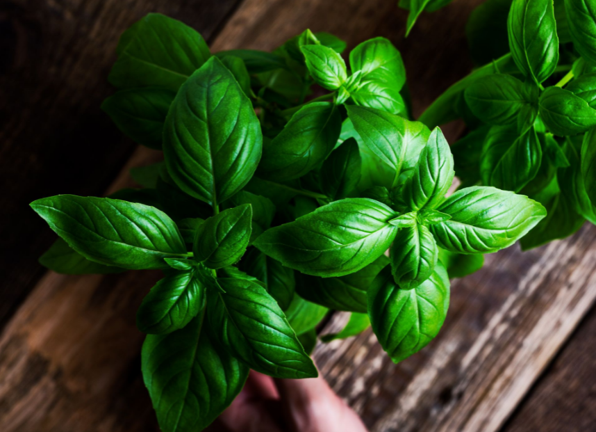 The Benefits of Basil - Nutrition, Uses and More